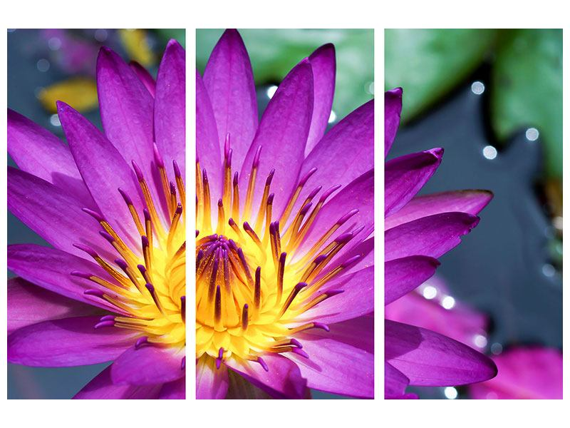 3 Piece Acrylic Print Macro Water Lily In Purple