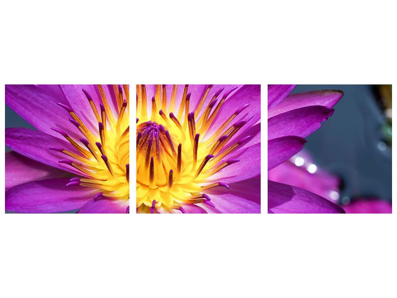 Panoramic 3 Piece Acrylic Print Macro Water Lily In Purple
