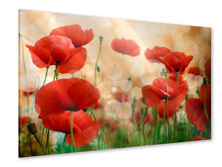 Acrylic Print The Poppy