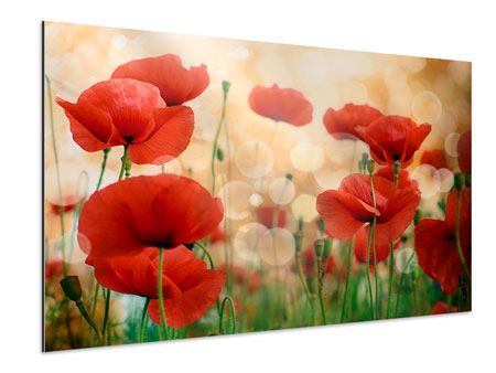 Aluminium Print The Poppy