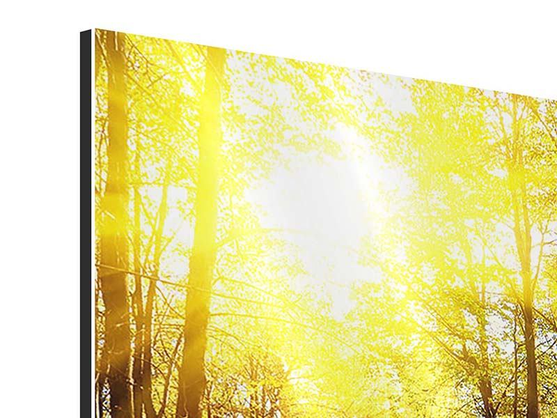 Aluminium Print Woodland Walk In The Autumn Sun