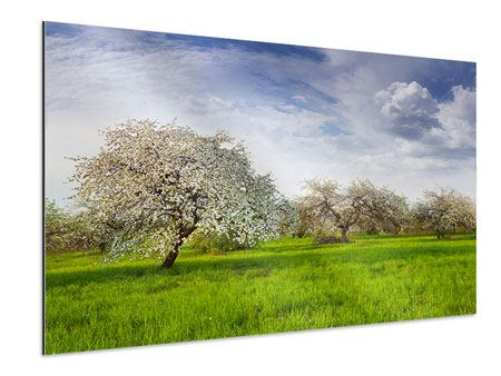 Aluminium Print Apple Tree Garden