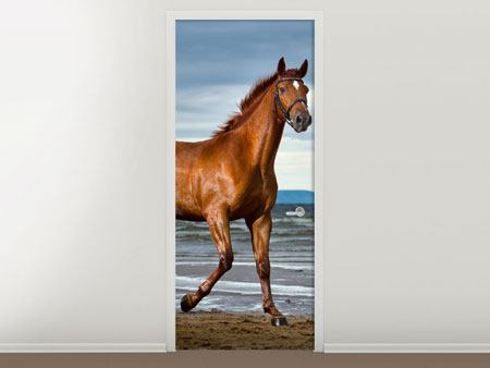 Door Mural A Thoroughbred At The Sea
