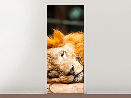 Door Mural Relaxed Lion