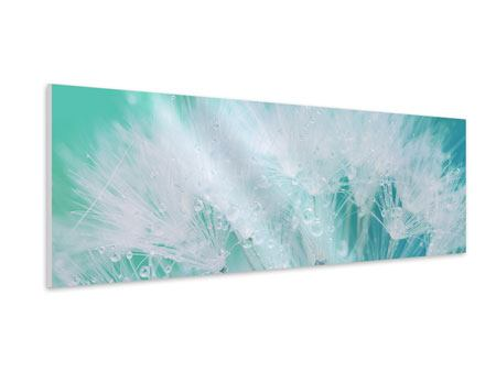 Panoramic Forex Print Close Up Dandelion In Morning Dew