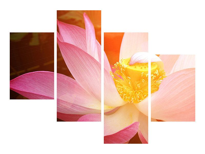 Modern 4 Piece Forex Print Close Up Lotus