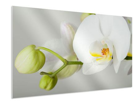 Forex Print Giant Orchid