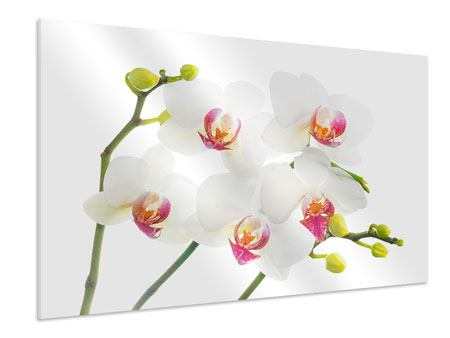 Forex Print Orchids Love