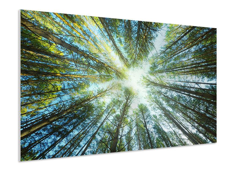 Forex Print Pine Forest