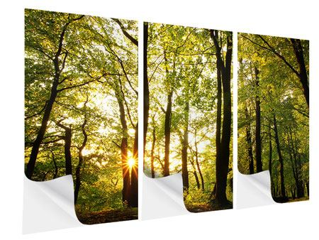 3 Piece Self-Adhesive Poster Sunset Between Trees