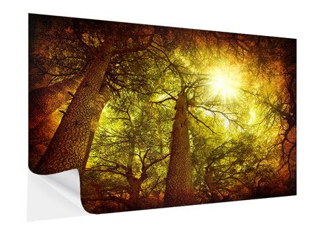 Self-Adhesive Poster Cedar Tree
