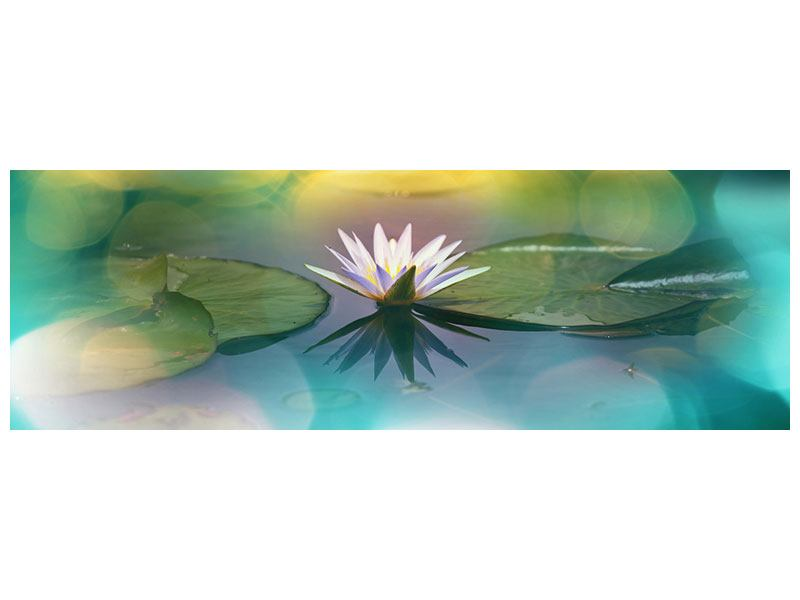 Panoramic Canvas Print Lotus Reflection