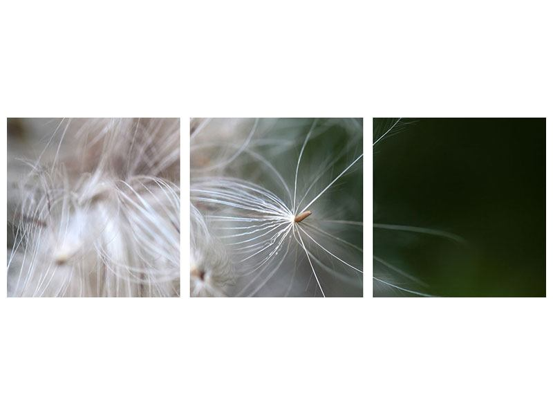 Panoramic 3 Piece Canvas Print Close up Flowers Fibers