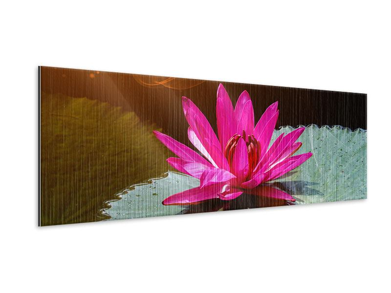 Panoramic Metallic Print The Frog And The Lily Pad