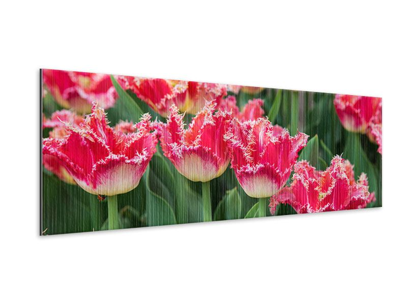 Panoramic Metallic Print The Tulips Meadow