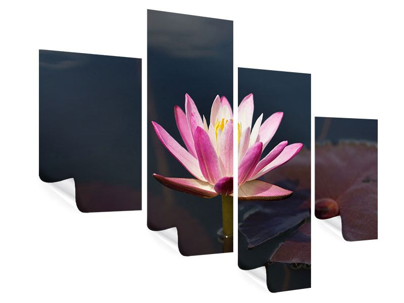 Modern 4 Piece Poster Water Lily At Dusk
