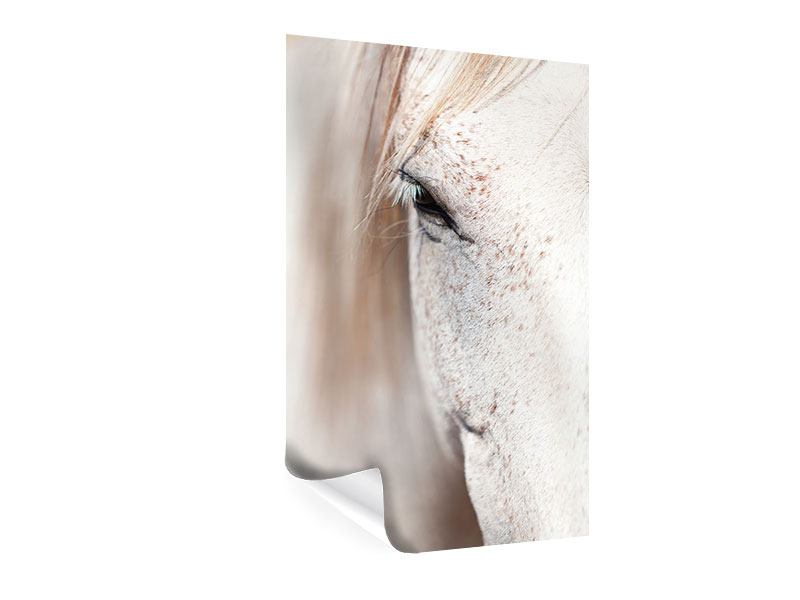 Poster Whole Blood White Horses