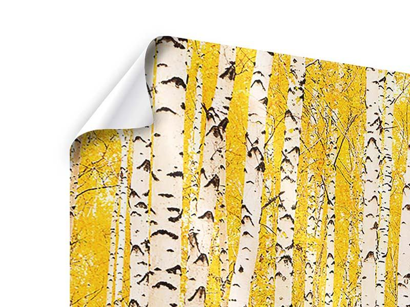 5 Piece Poster The Birch Forest In Autumn