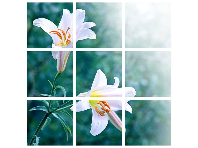9 Piece Poster White Lily Duo