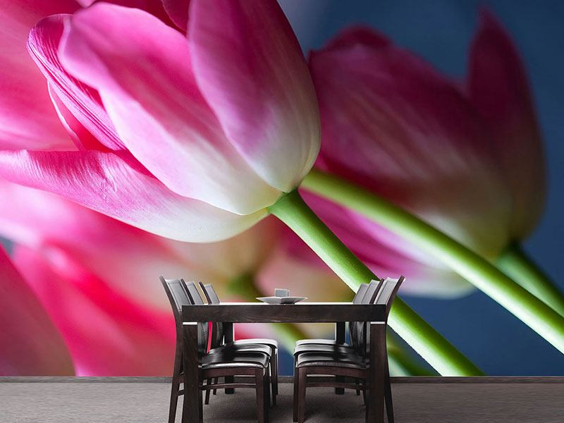 Photo Wallpaper Macro Tulips